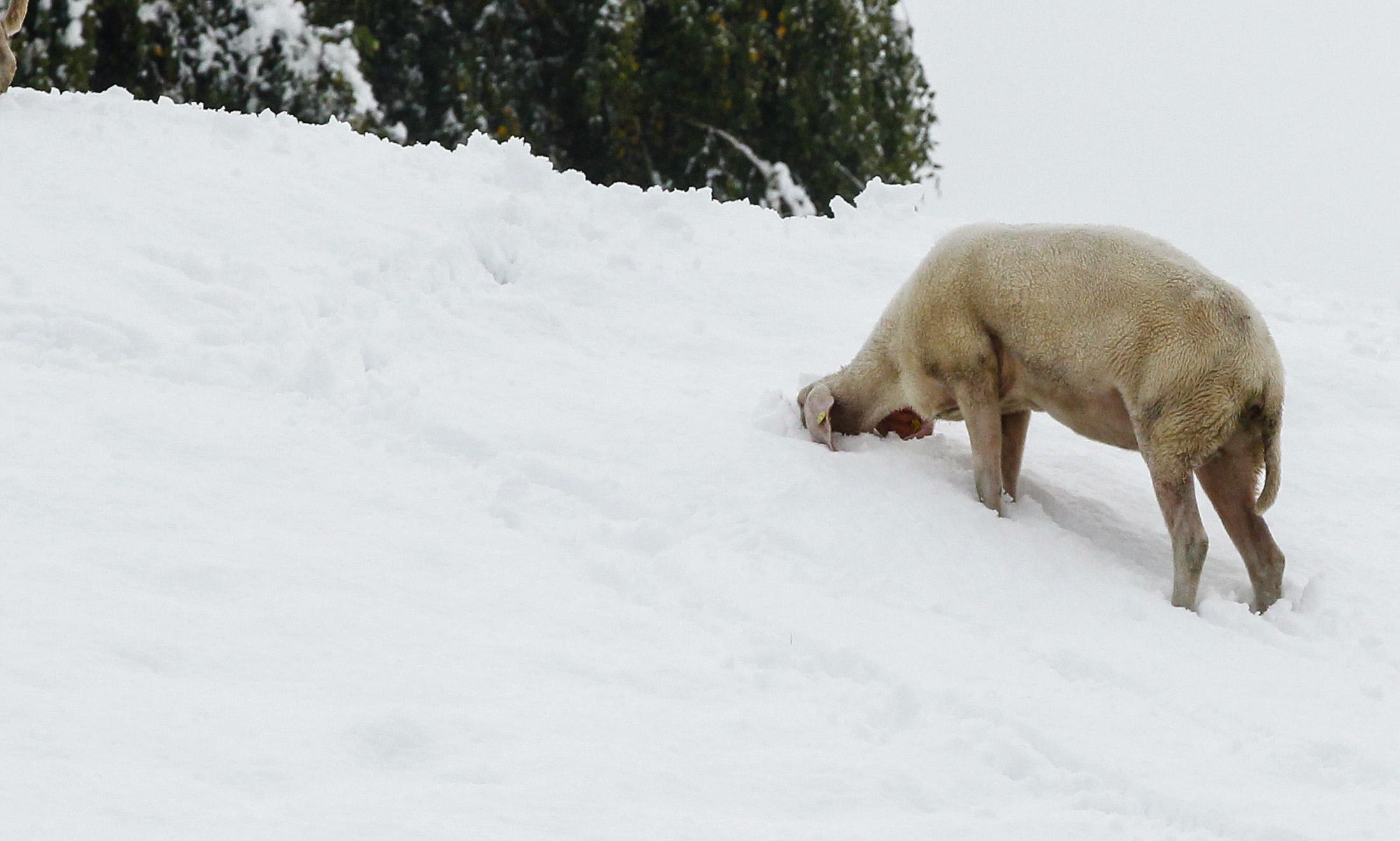 Ausztria nyugati felében mára virradóra nagy havazás volt. Itt bezzeg jön a  25 fok! 803384a7da