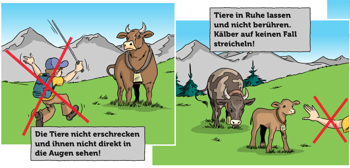 Most Svájcban ölt tehén egy 77 éves német nőt. Meddig tűrjük még  79a67b8af8